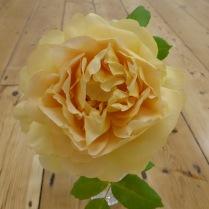 K 1st - Rose - Helen Statham