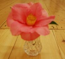 K 1st - Camellia - Carolann Young